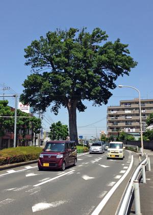 3折り返しの木.jpg